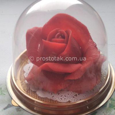 Троянда мило подарунок для дівчини
